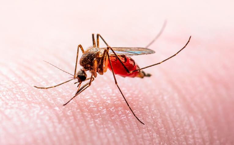 Virus del Nilo enfermedad transmitida por mosquitos